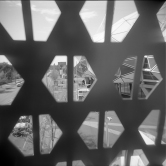 Roll 172 Holga HP5923